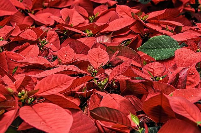 Don't Miss Season's Greenings: America's Gardens at the US Botanic Garden